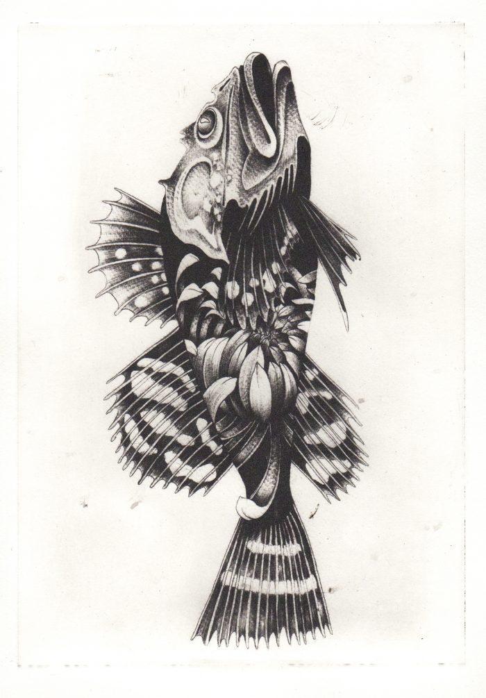 Chrisanthemum Fish (2018) Susanna Widmann, Photopolymer Intaglio, 25cmx17.5cm