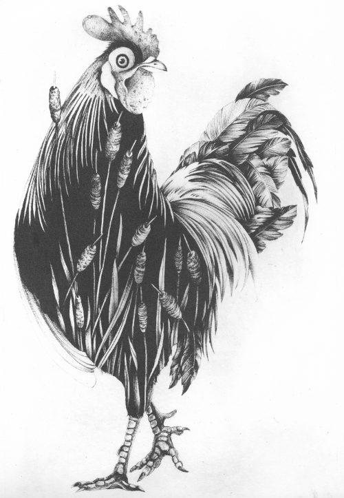 Cockerel (2019) Susanna Widmann, Photopolymer Intaglio, 35cmx25cm