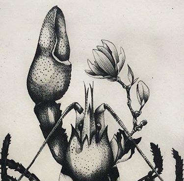 Magnolia Lobster (2018) Susanna Widmann, Photopolymer Intaglio, 25cmx17.5cm