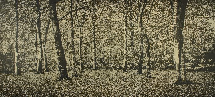 The beech wood (2020) Trevor Price, Drypoint and engraved relief print, 59x112