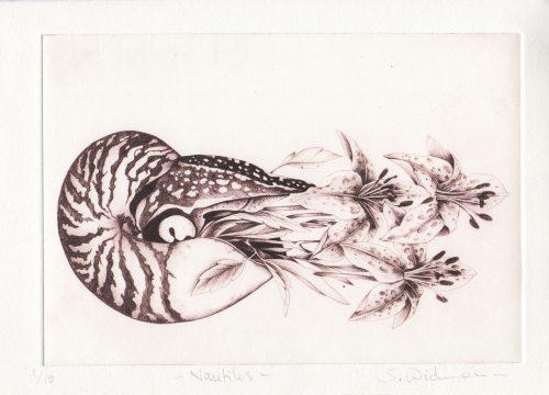 Nautilus - Susanna Widmann - Discover Contemporary Art Prints & Printmaking